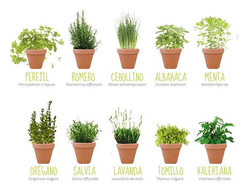 Mis prop sitos de decoraci n 2015 for Tipos de plantas aromaticas