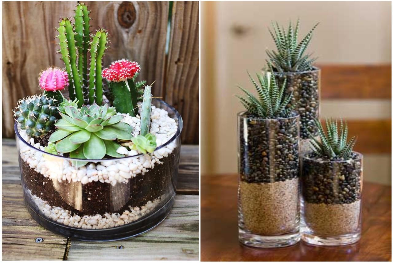 El Reino Plantae Como Hacer Un Terrario - Terrario-para-plantas