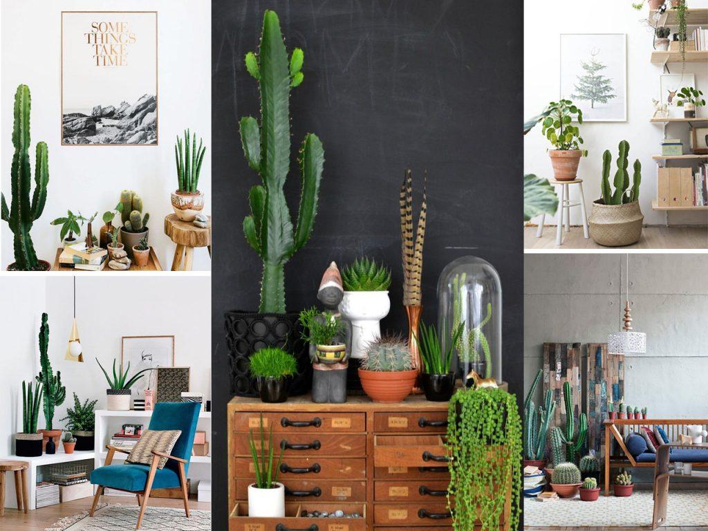 Decorar con cactus y suculentas se llevan los extremos for Ideas para decorar interiores