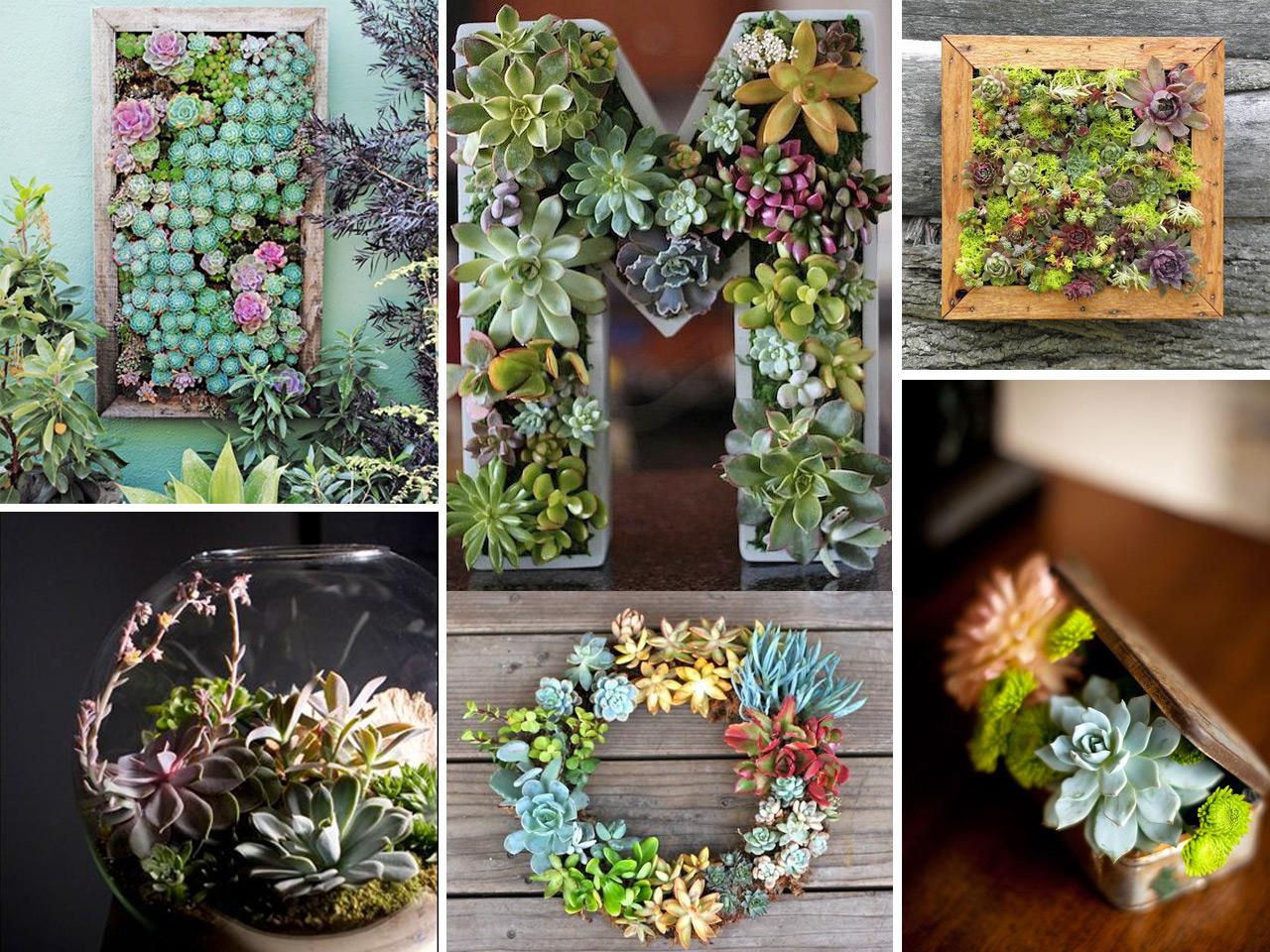 Decorar con cactus y suculentas se llevan los extremos - Decorar mesas de jardin ...