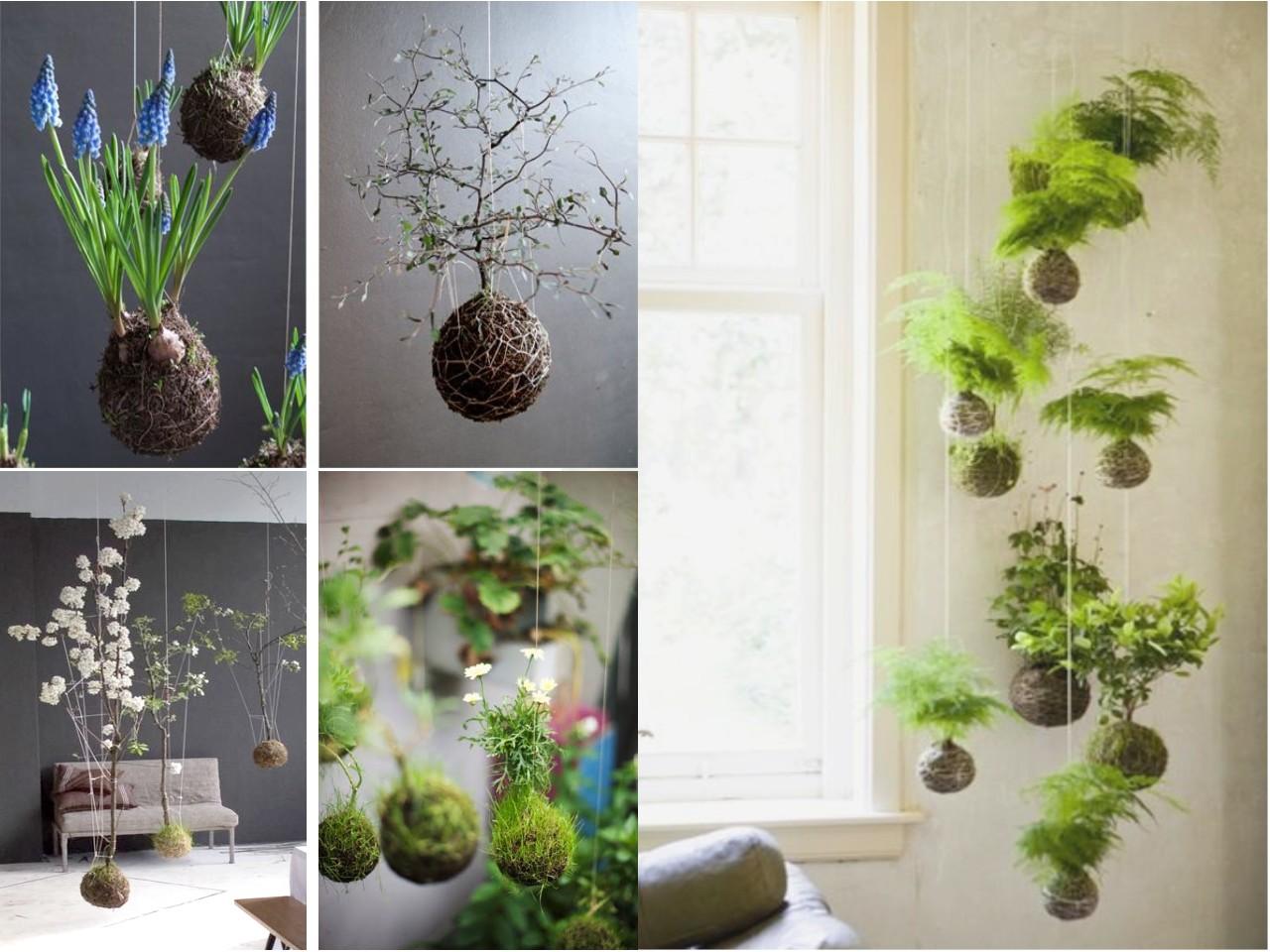 decoracin con plantas colgantes con kokedama
