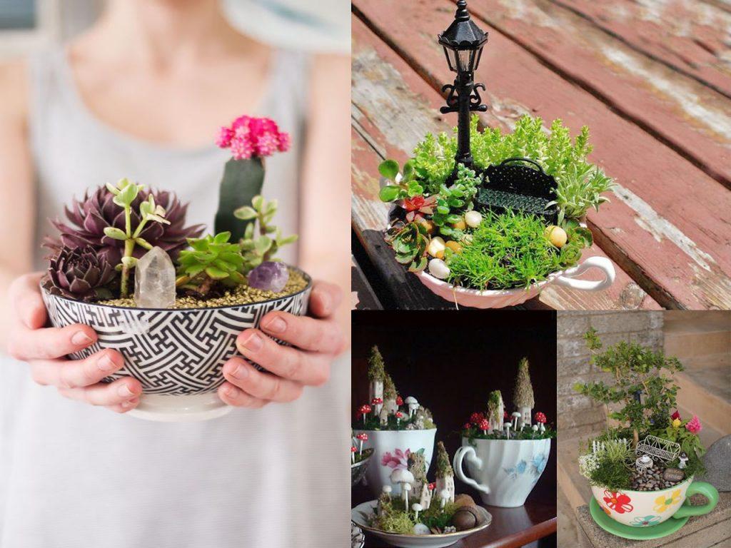 jardines en miniatura en tazas