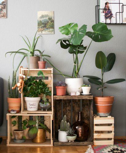 decoración fresca plantas