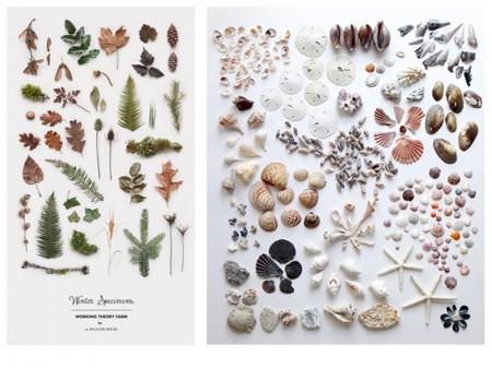 Colección bosque y colección marina. Visto en Pinterest.