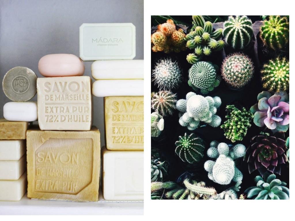 Colección de jabones y colección de cactus. Visto en Pinterest.