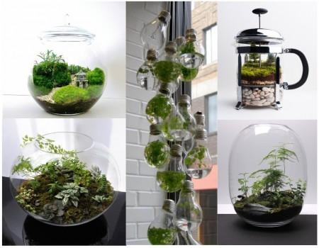 proyectos decoración: terrarios