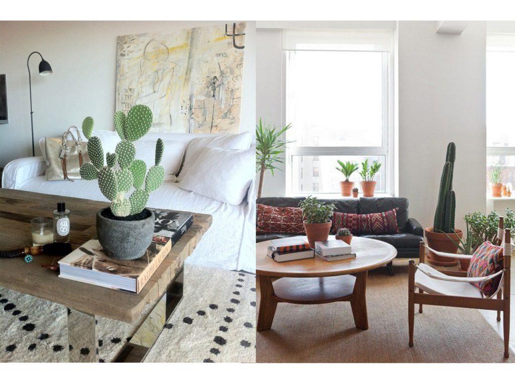 como decorar con cactus y suculentas