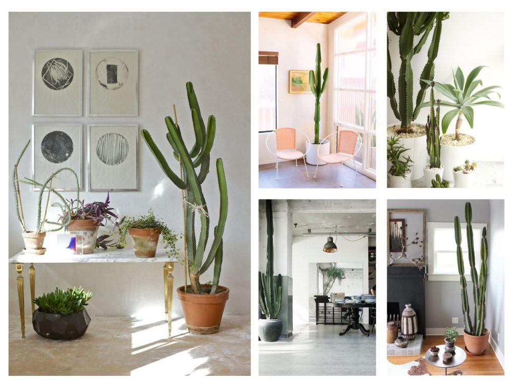 como decorar con cactus