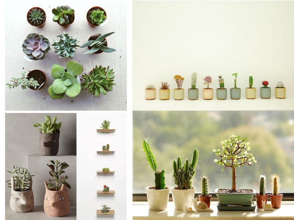 decorar con mini cactus