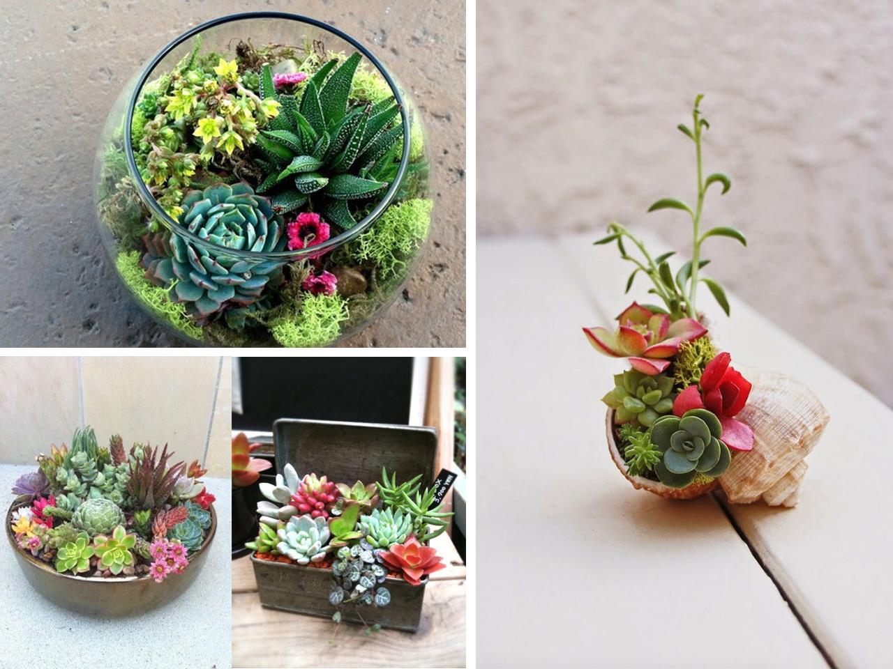 Decorar con cactus y suculentas Se llevan los extremos