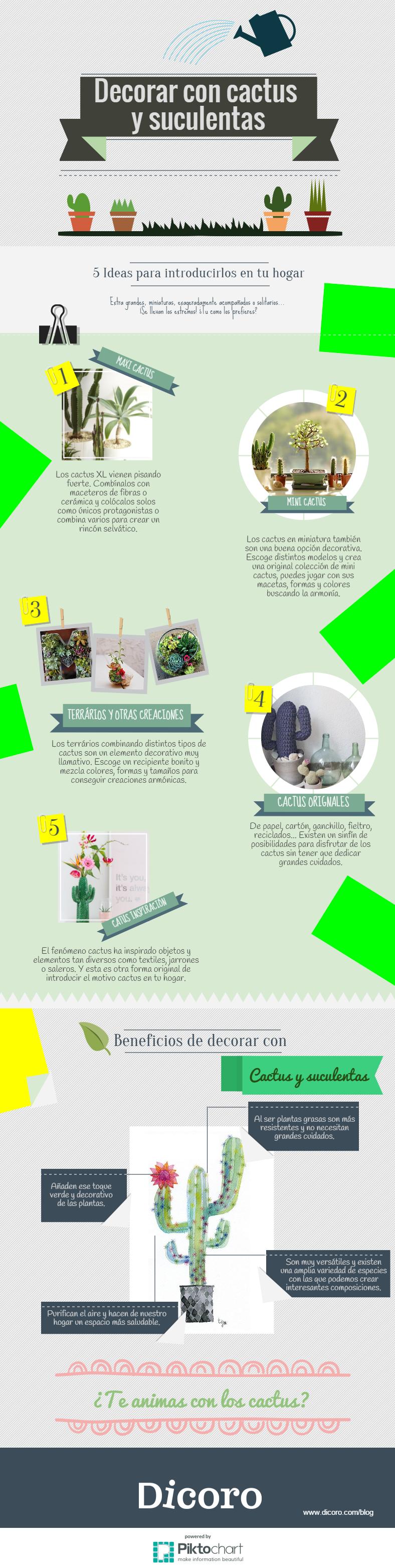 Decorar con cactus y suculentas: Infografía DICORO