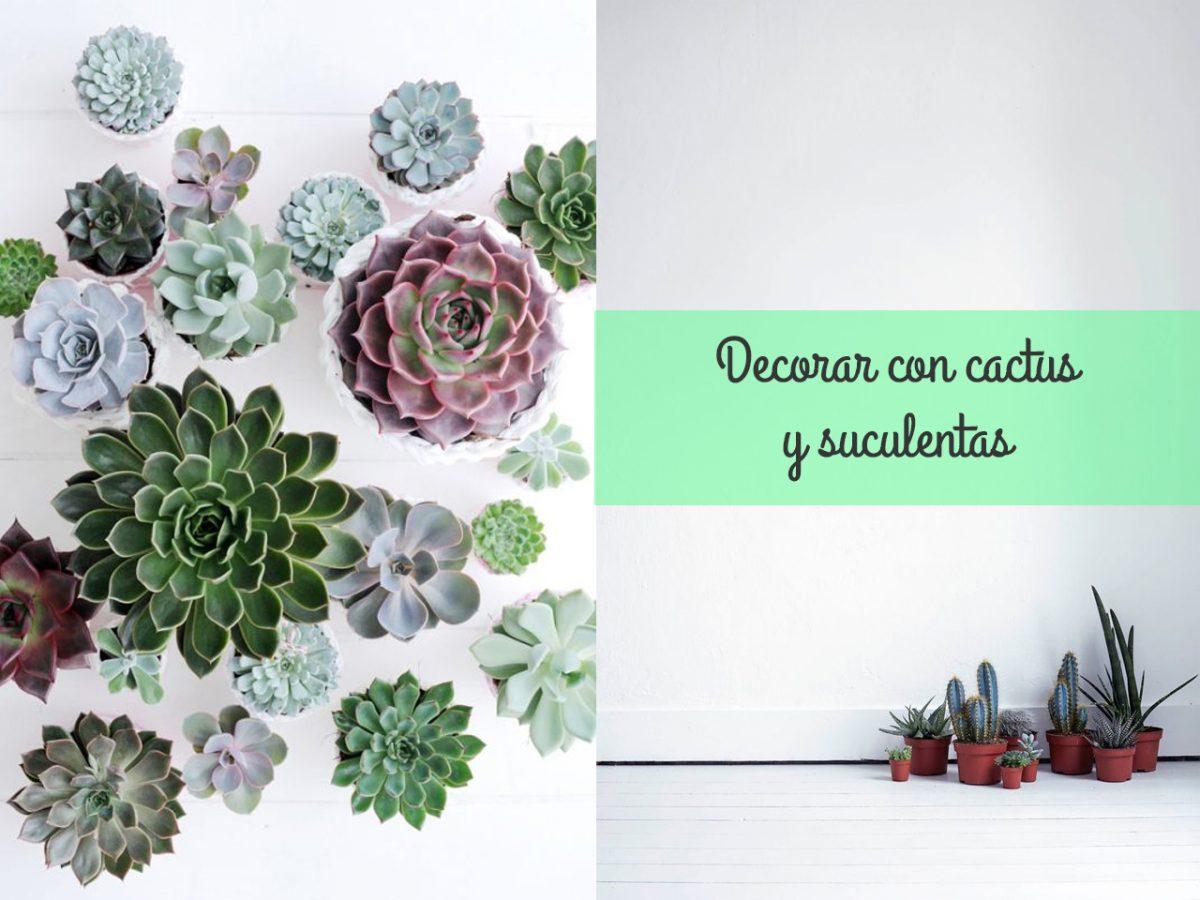 Decorar con cactus y suculentas ¿Os atrevéis?