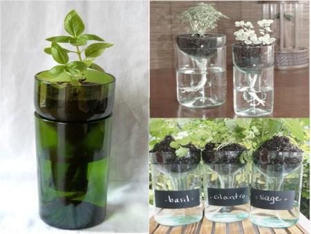 Cómo reciclar botellas de vidrio con plantas