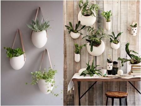 plantas colgantes en bolsas
