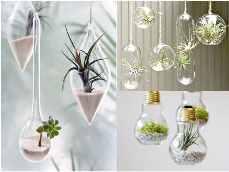 decoración con plantas colgantes de cristal