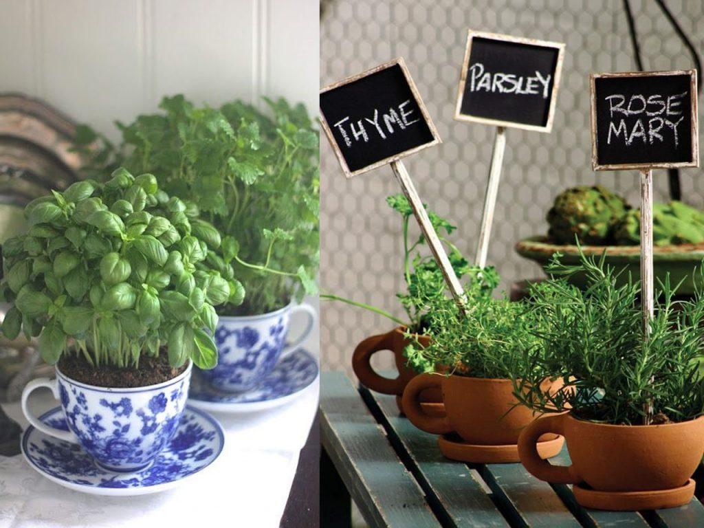 6 ideas para reciclar tazas y decorar - Cultivar plantas aromaticas en casa ...