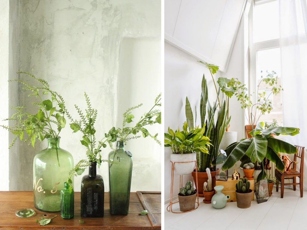 decoración con greenery plantas