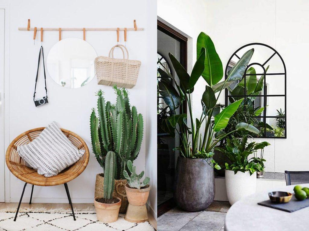 decoración tropical para el salón plantas