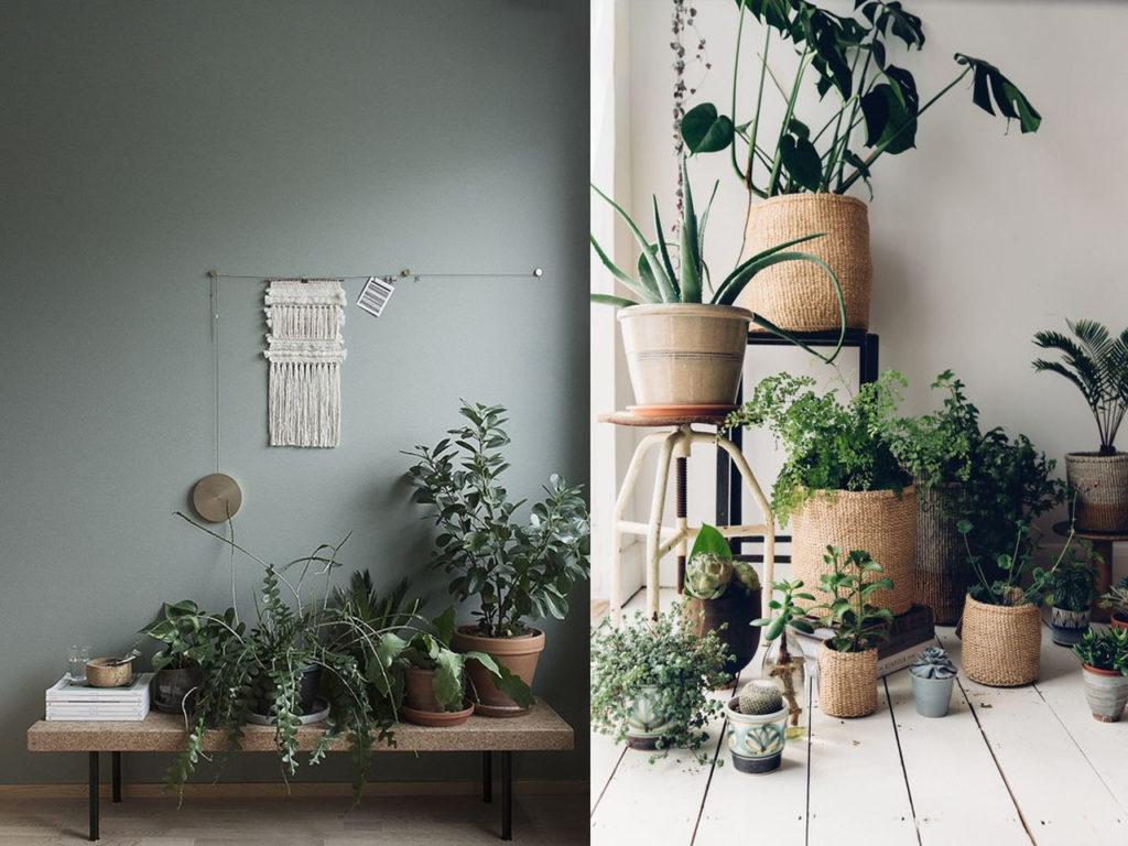 decoración relajante plantas
