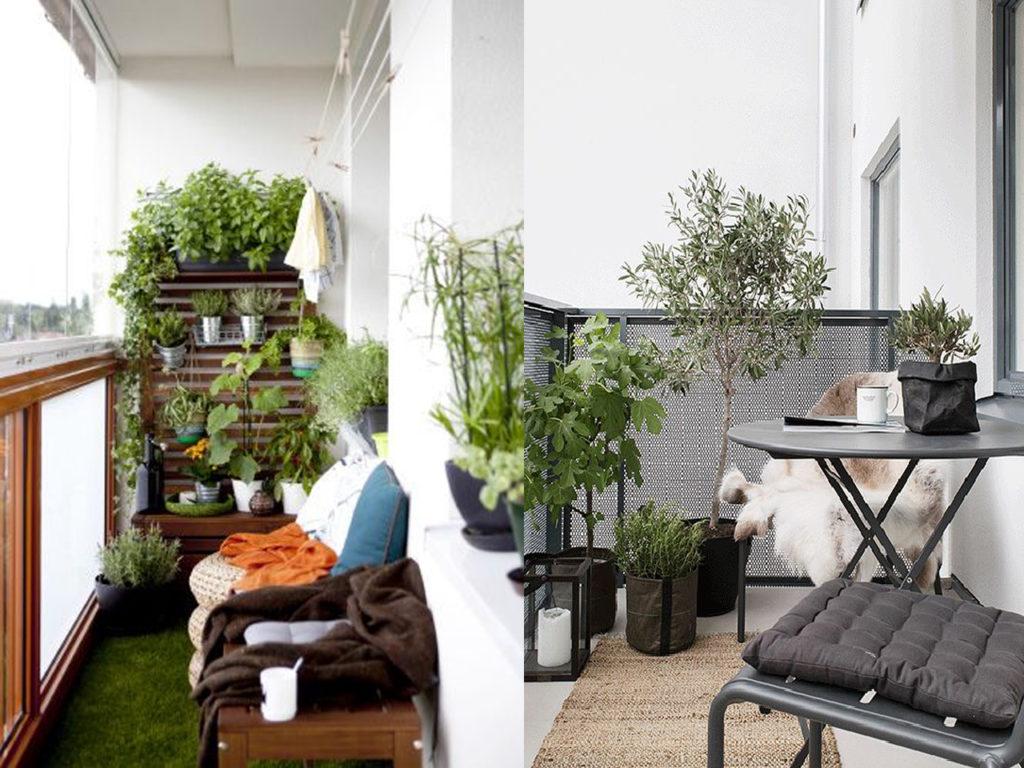 Ideas para vestir tu terraza de invierno y disfrutarla for Plantas de balcon para todo el ano