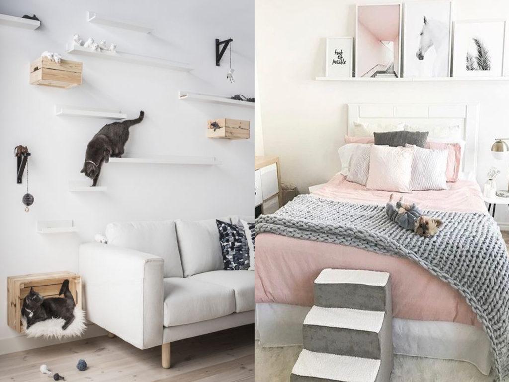 pensar en mascotas y decoración