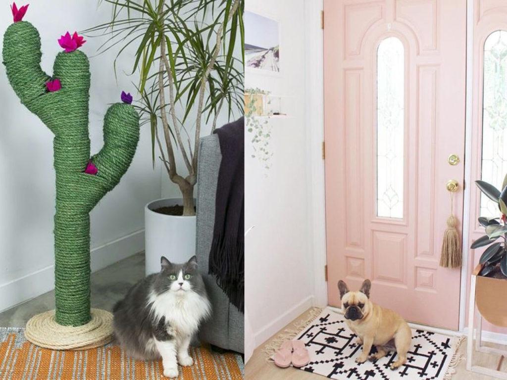 como divertirse con mascotas y decoración