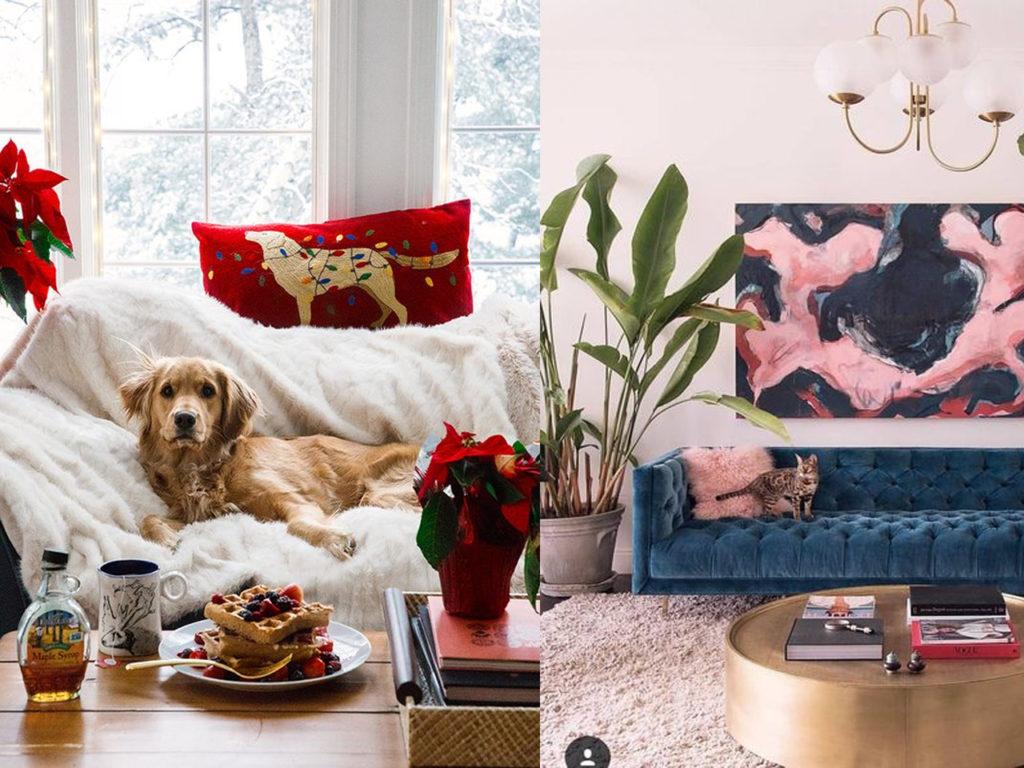 la mejor tapicería si tienes mascotas y decoración